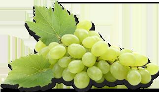 8788-grapes