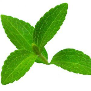 daun stevia